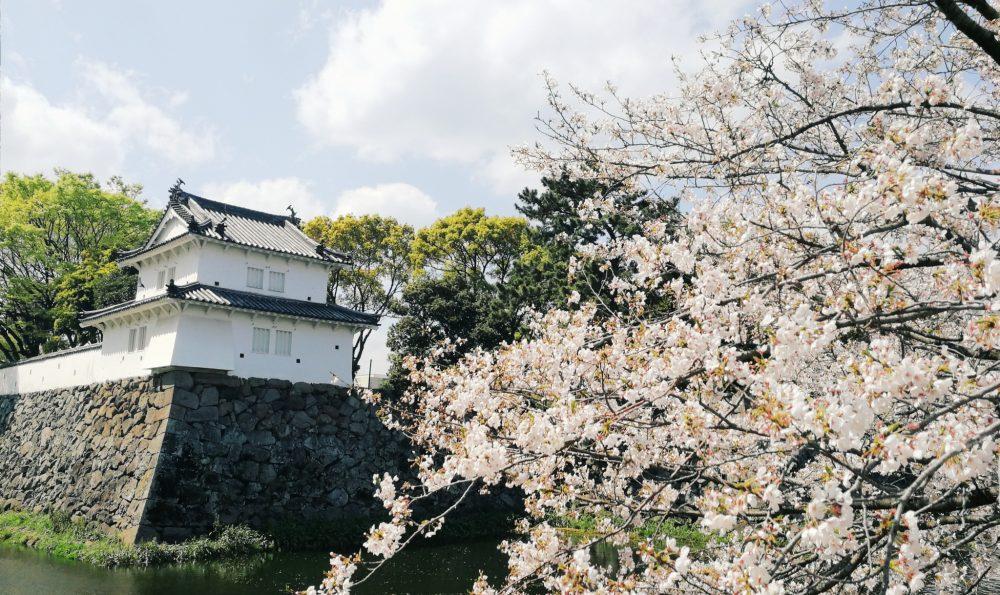 春だ桜だ、城址公園にてトリアナお花見会2019を開催。
